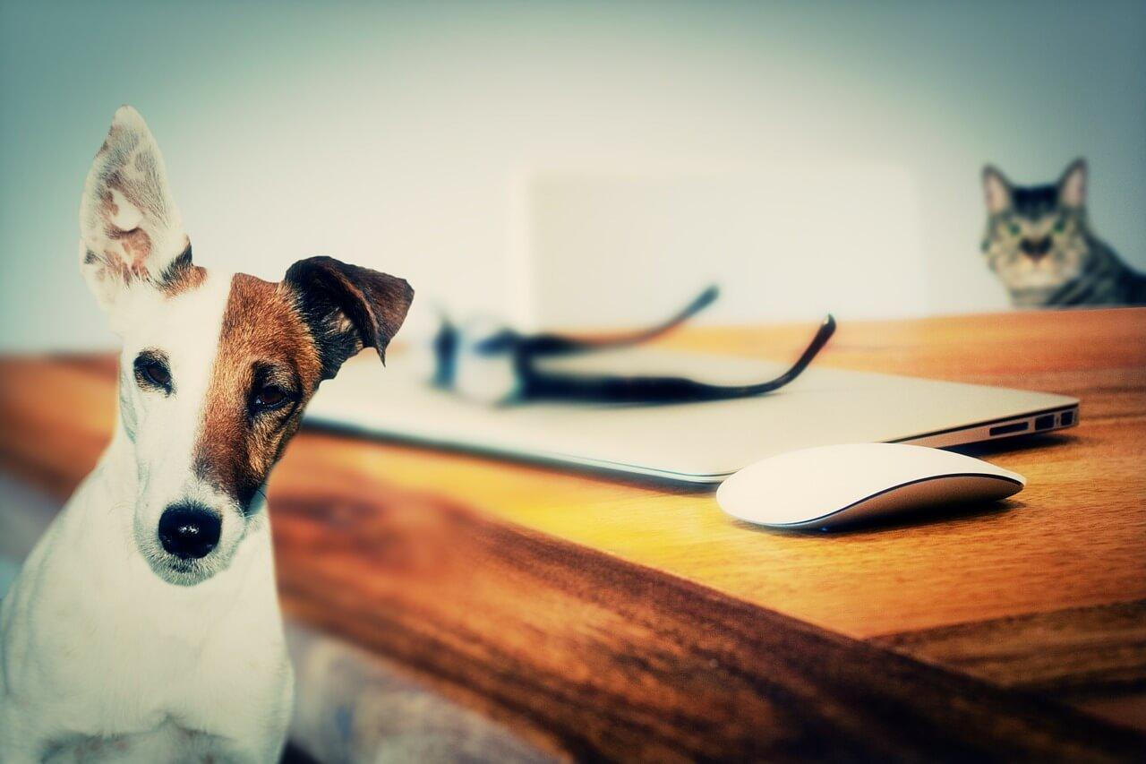 Haushaltsnahe Dienste: Steuerbonus jetzt auch für Betreuung von Haustieren