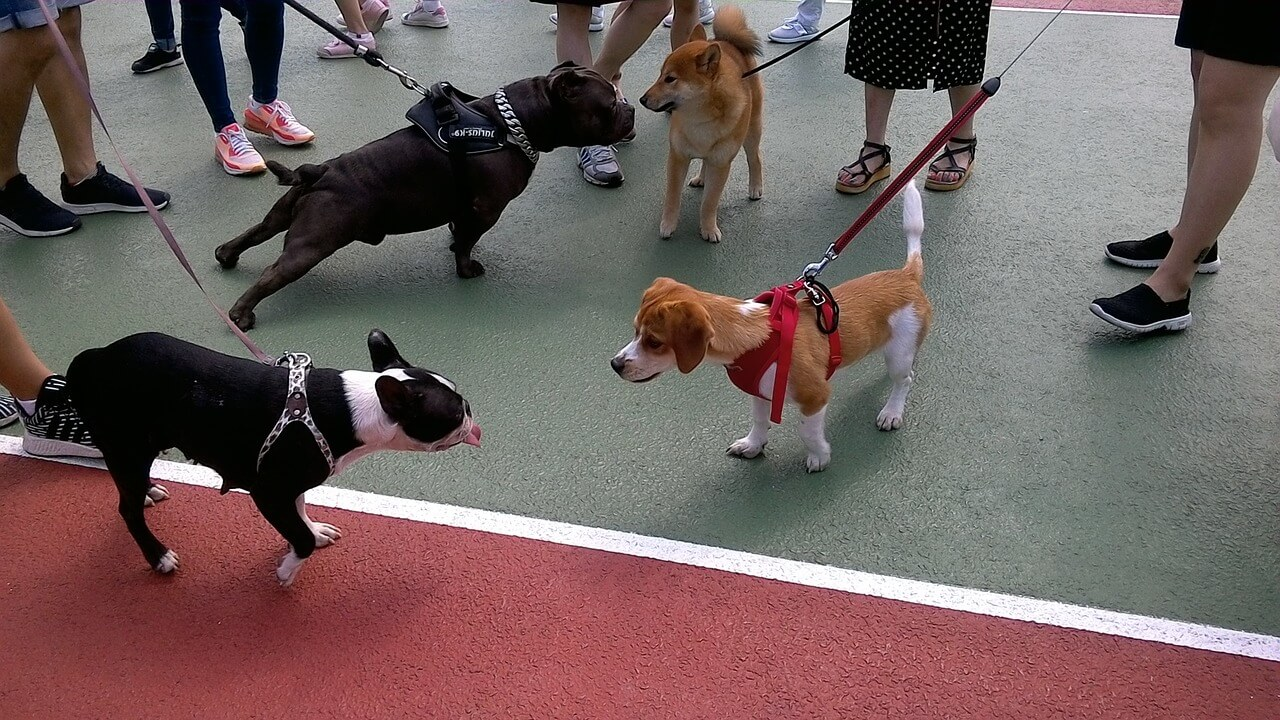 Steuerbonus auch für das Ausführen eines Hundes