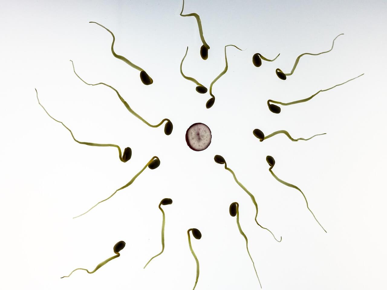 Künstliche Befruchtung: Wann sind die Kosten steuerlich abziehbar?